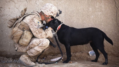 soldier-and-dog-reunion-featured1